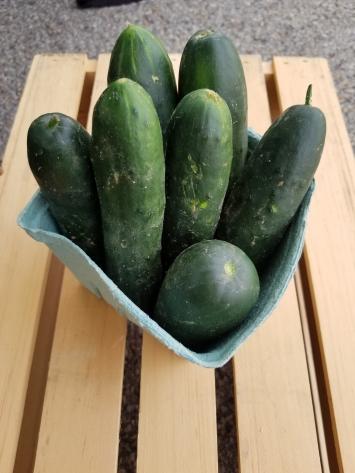 Cucumbers (1 Quart)