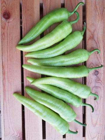 Hot Banana Peppers (1 lb)