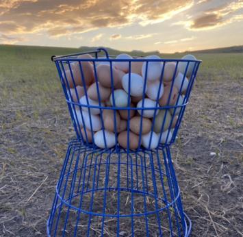 Eggs - Dozen Chicken Eggs