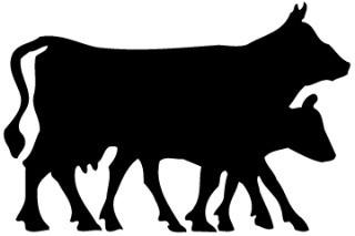 Beef Osso Bucco/ Shank