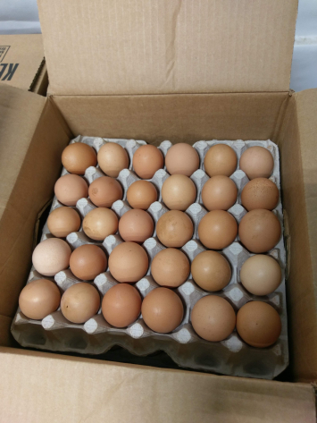 Food Service Eggs - Large Flats Case