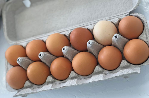 Pastured Eggs:  XL/Large