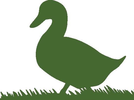 Duck Frames