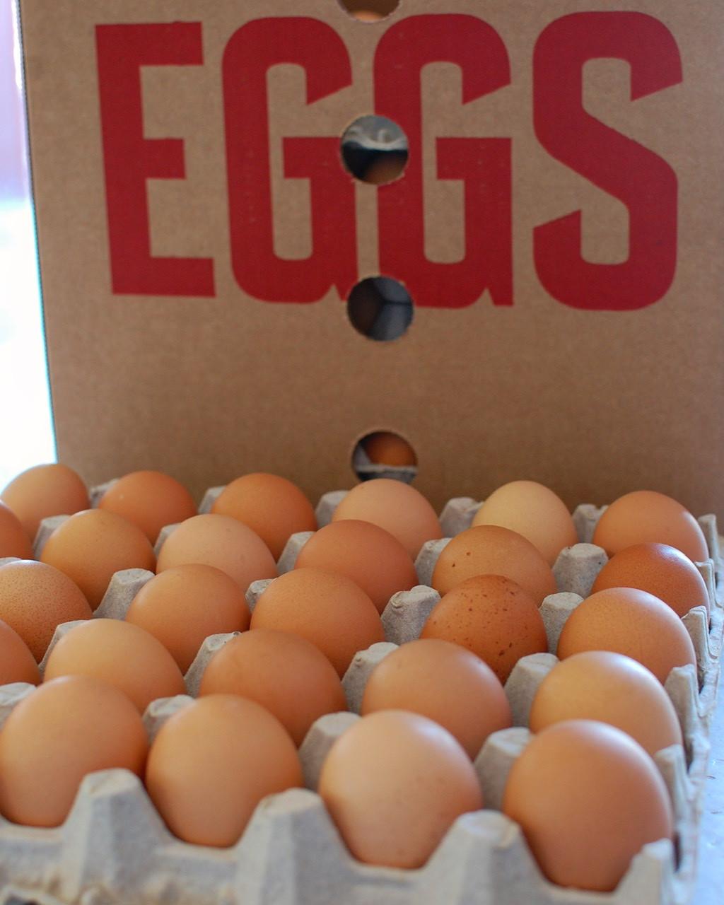 Pastured Eggs - CASE