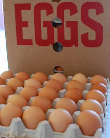 Pastured Eggs - CASE (pullets)