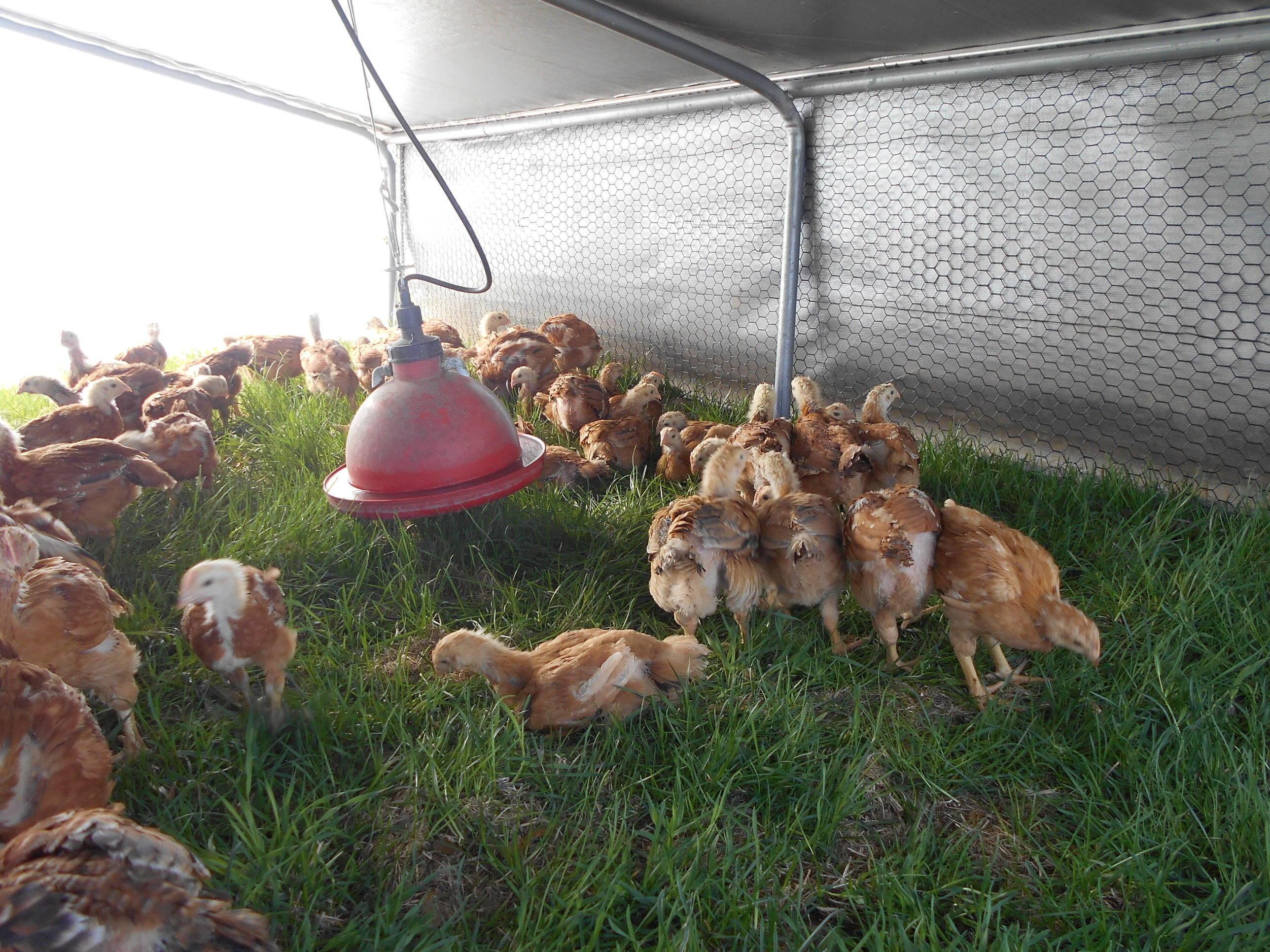 Farm Photos Meadow Run Farm