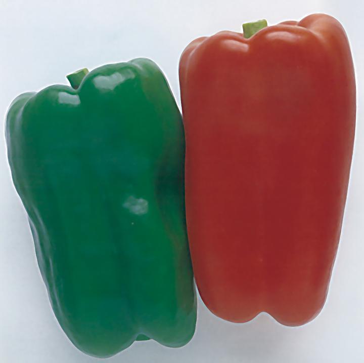 Pepper, Ace Hybrid
