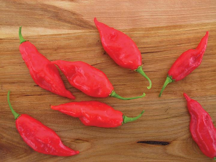 Maya Habanero Hot Pepper