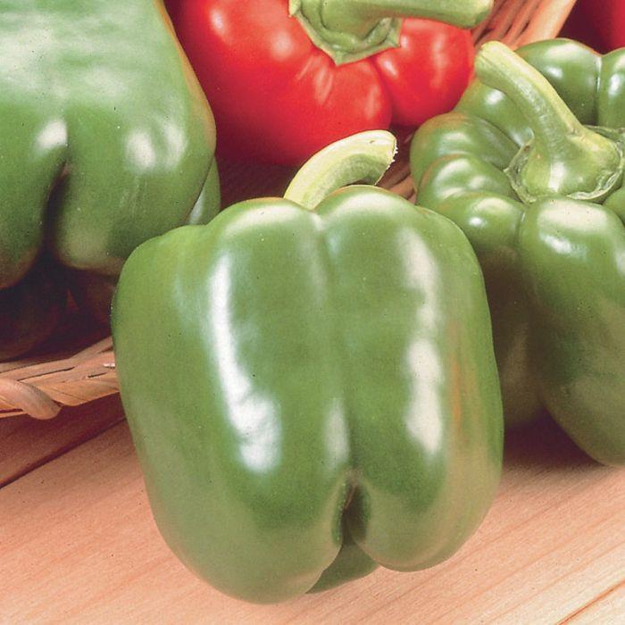 Pepper, Sweet; Fat 'n Sassy