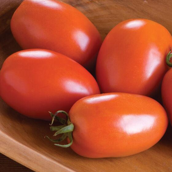 Paste Tomato - Amish Paste