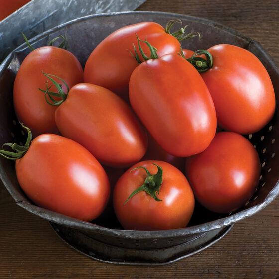 Paste Tomato - Plum Regal