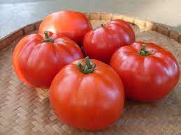 Starfire Improved Tomato