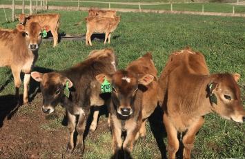 Herd Share Buy-In