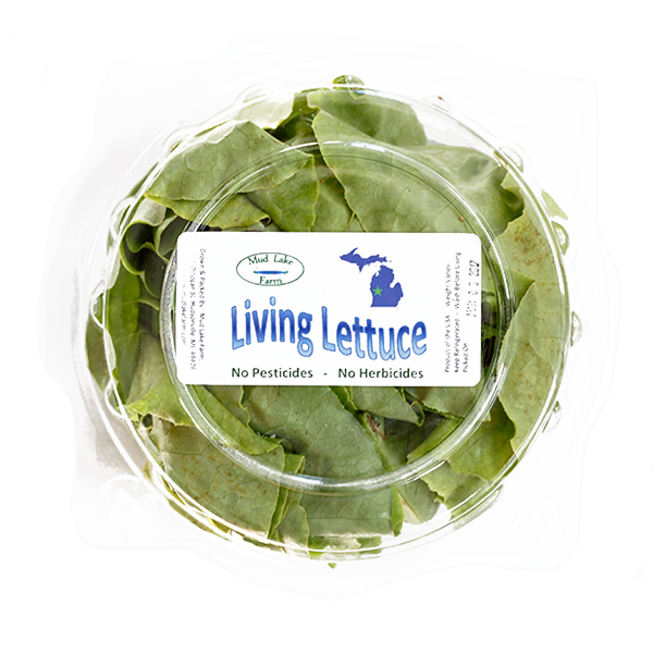 Living-Lettuce-600x600.png