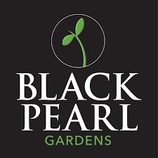 Black Pearl Gardens Microgreens