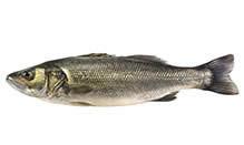 European Sea Bass (Loup de Mer), Whole