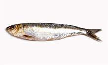 Sardines, Whole