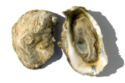 Bluepoint Oysters