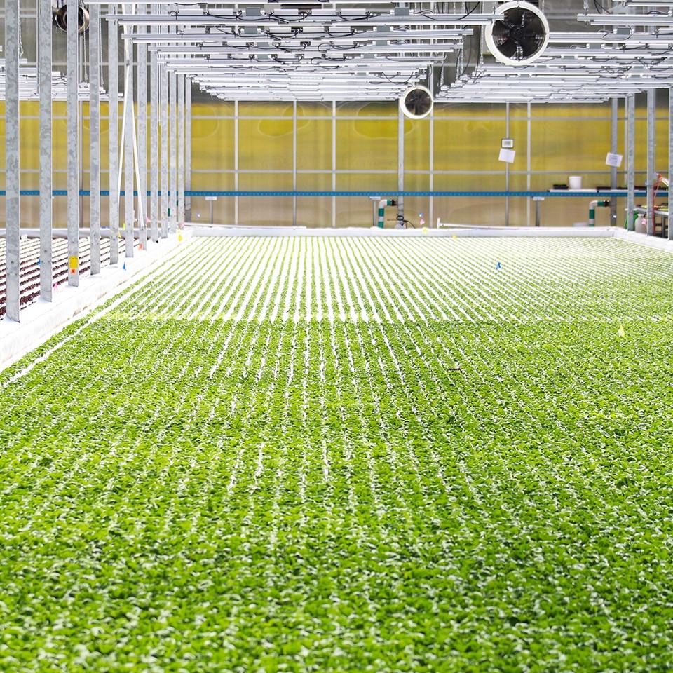 Revolution_indoor-growing.jpg