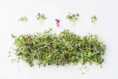 Black Pearl Gardens - Microgreens Asian Mix