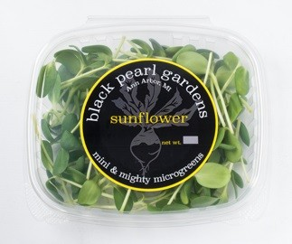 Black Pearl Gardens Sunflower Shoots