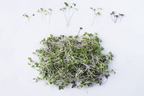 Microgreens - Michigan Farm to Family