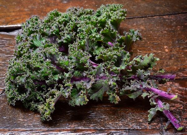 Kale - Red Curly - Tantré Farm