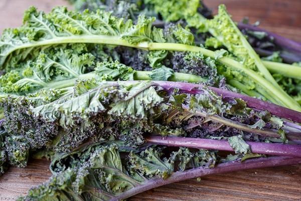 Kale, Rainbow - Tantré Farm
