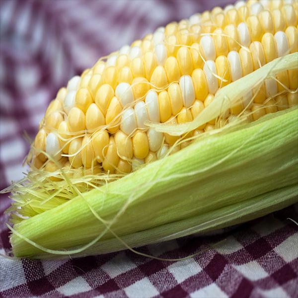 Organic Corn on the Cob
