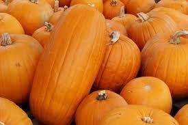 Squash, Pumpkin - Tantré Farm Squash