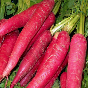 Carrots, Red - Tantré Farm