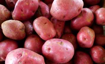 Organic Red Skin Potatoes