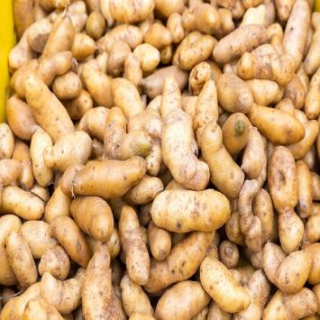 Potatoes, Russian Fingerlings - Tantré Farm