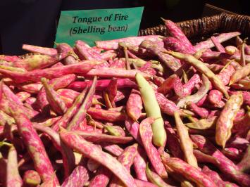 Beans, Tongues of Fire - Tantré Farm