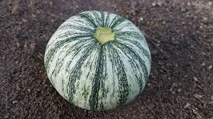 Tantré Farm - Squash, Gray Kabocha