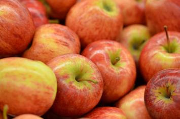 Almar Orchards -  Organic Gala Apples