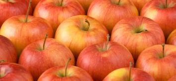 Almar Orchards -  Organic Pinata Apples