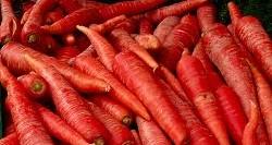 Tantré Farm - Carrots, Red