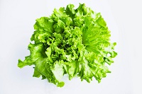 Organic Green Leaf Lettuce