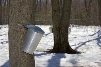Green Field Farms - Organic Pure Maple Tree Water,  Gallon