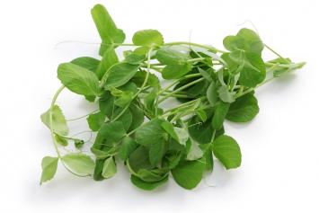 Organic Green Pea Shoots