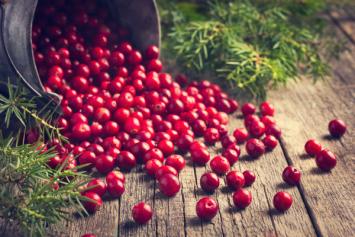 Michigan, Pesticide-Free Cranberries