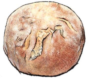 Paesano Bread