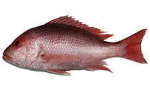 American Red Snapper, Whole
