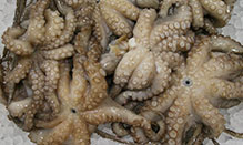 Octopus, Whole