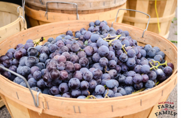 Locally-Grown Concord Grapes
