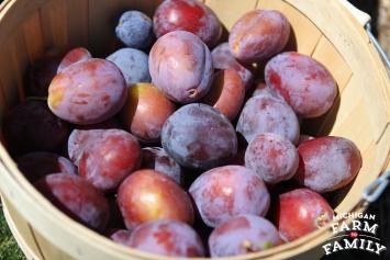 Locally-Grown Prune Plums