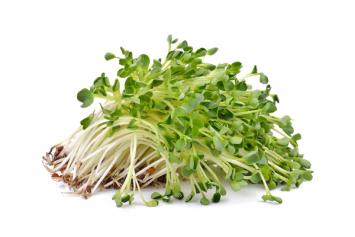 Organic Alfafa Sprouts