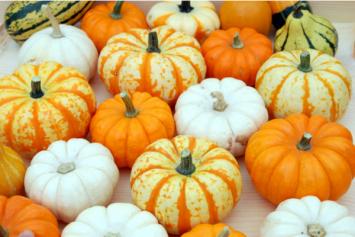 Locally-Grown Mini Pumpkins & Gourds
