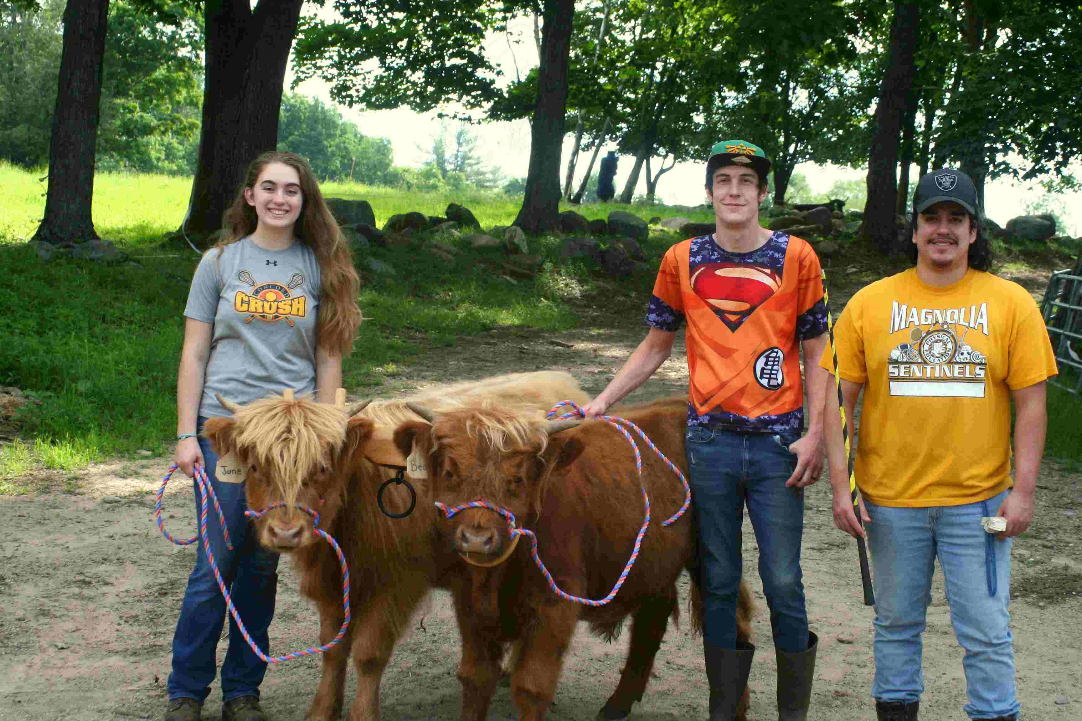 Working with the steers